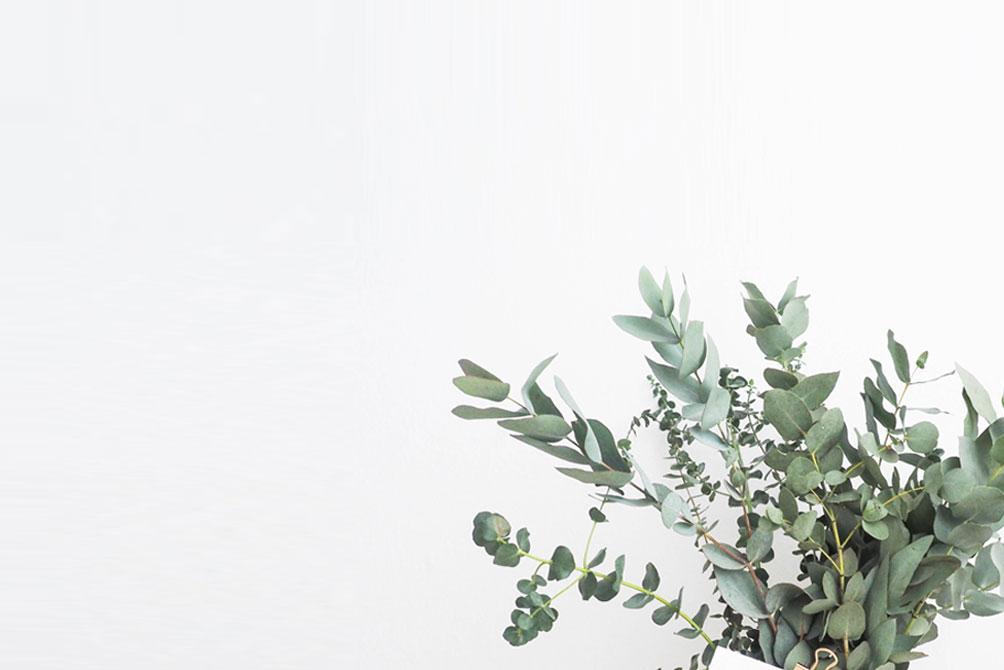 florist boutique morrinsville flowers